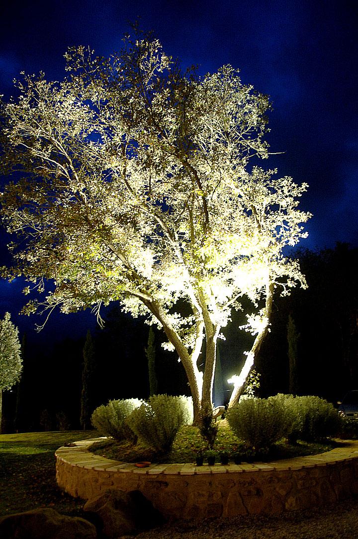 Casale Belforte - La quercia